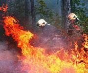 森林火灾,救援,视频